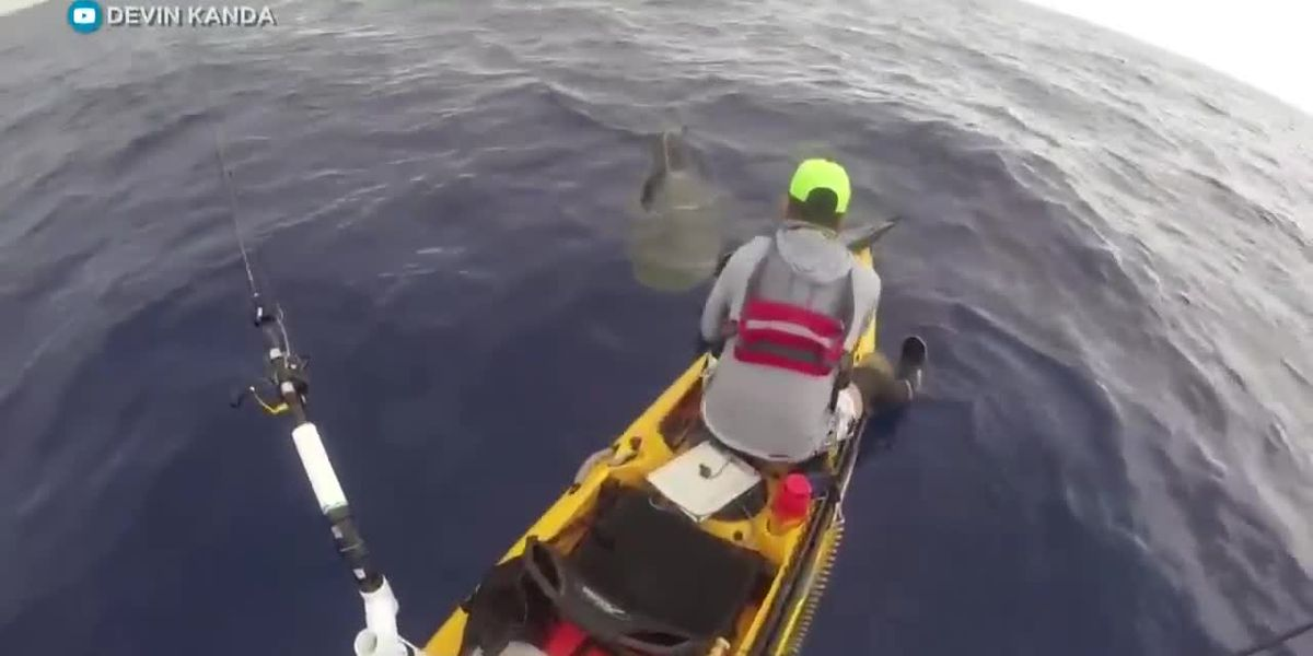 Oahu fisherman's tiger shark encounter off Oahu is caught on camera
