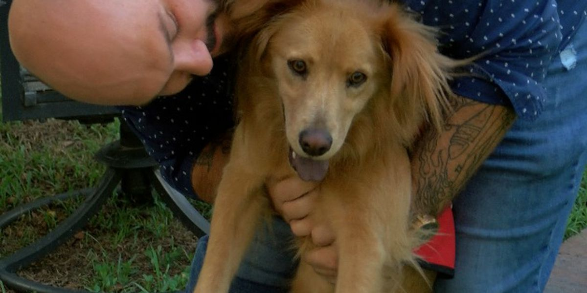 Booming fireworks scare off Summerville veteran's emotional support dog