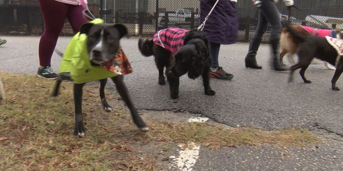 Charleston Animal Society hosts run and walk to raise money for medical fund