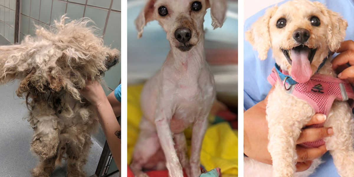 Richmond SPCA shares neglected dog's 'life-saving' transformation