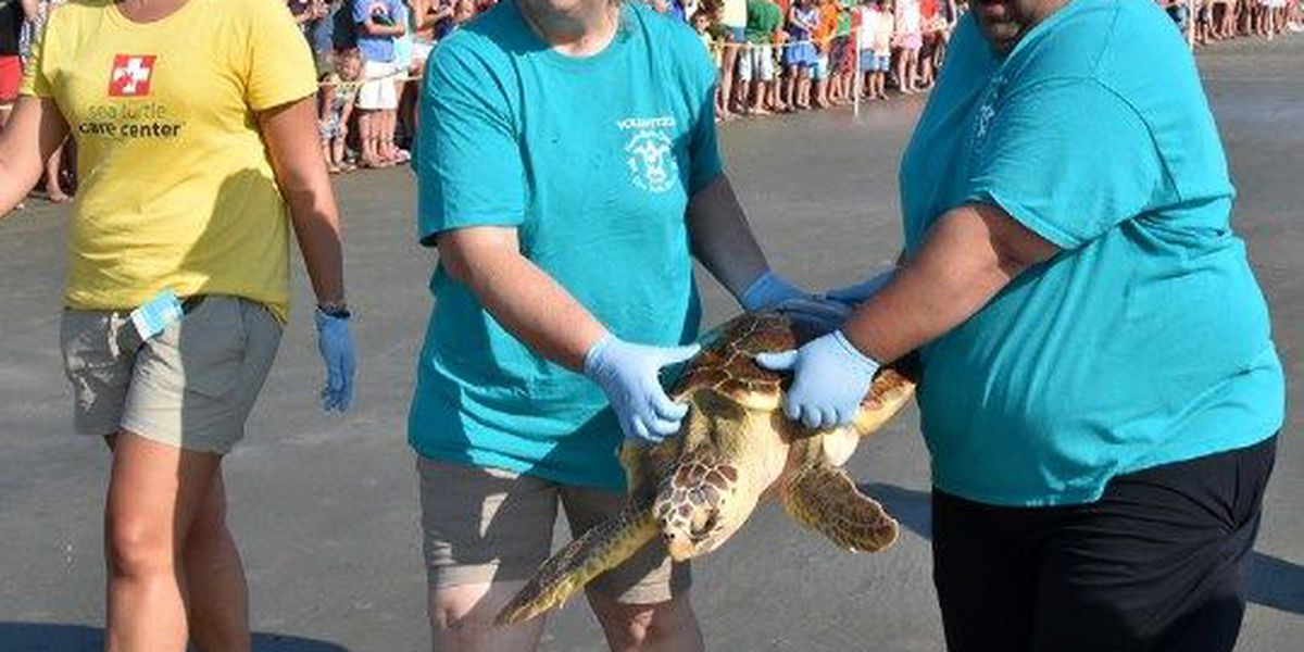 Rehabilitated turtles treated at new center released on Isle of Palms