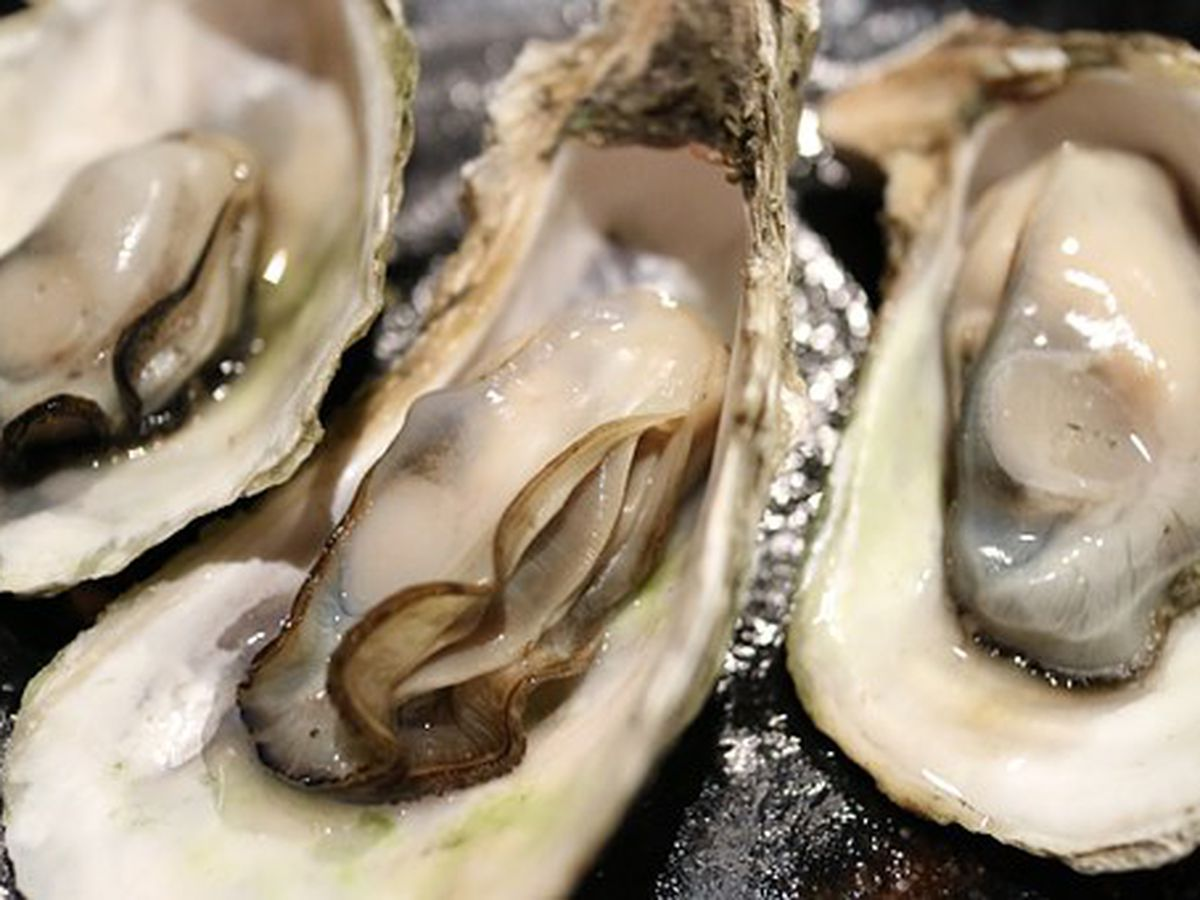 Oyster roast to benefit Habitat for Humanity