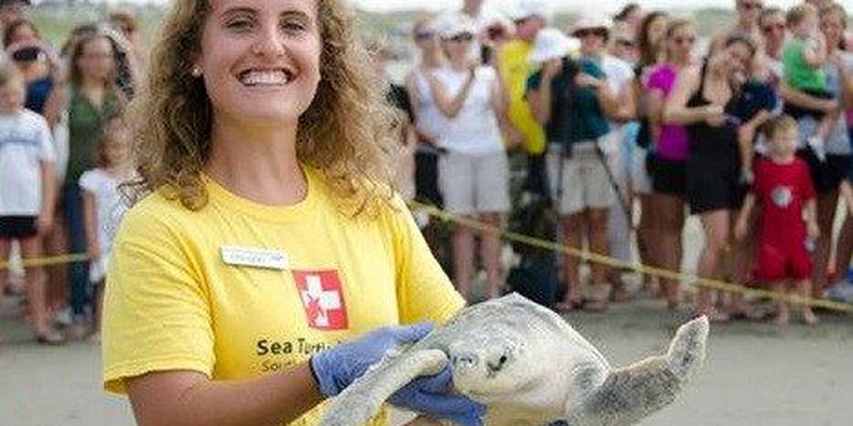 SC Aquarium to release sea turtles at Isle of Palms County Park