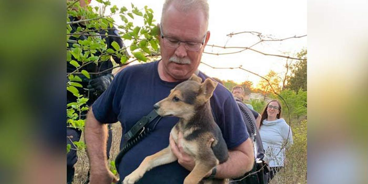 Firefighters rescue puppy from beneath pile of rocks