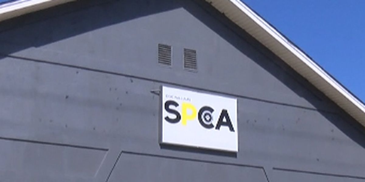 Doc Williams SPCA's financial trouble stems back years