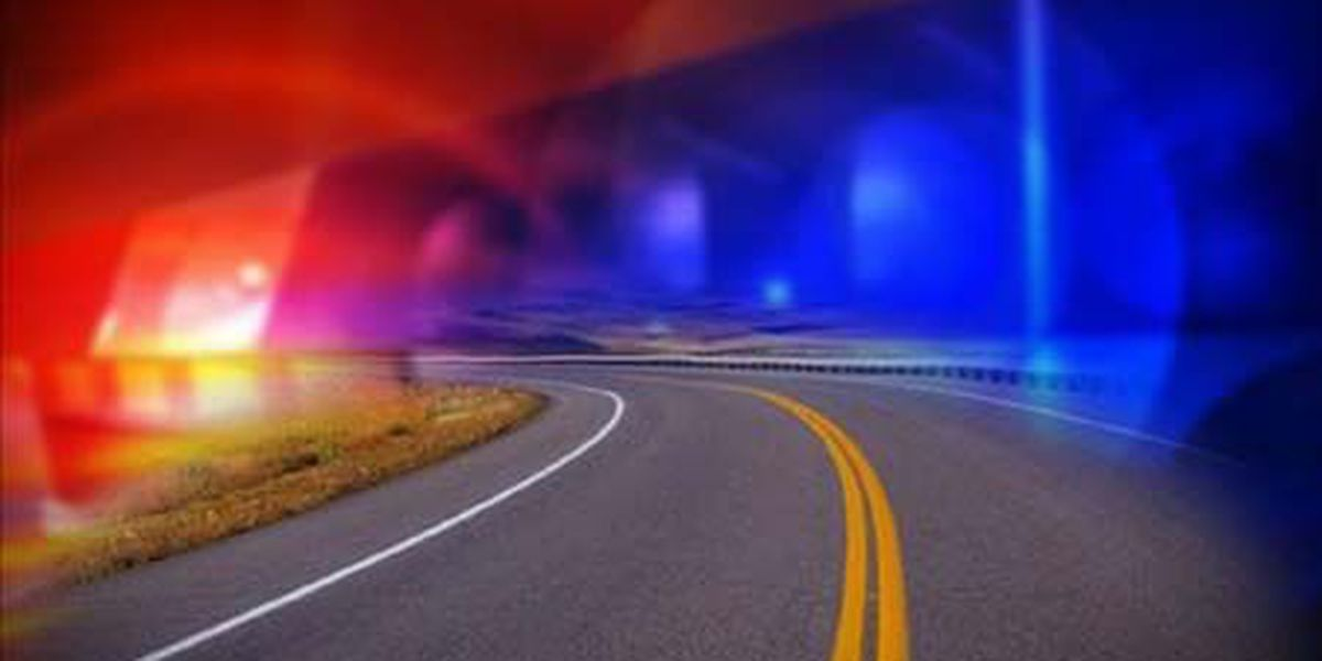 Motorist dies after striking ditch, tree and road sign