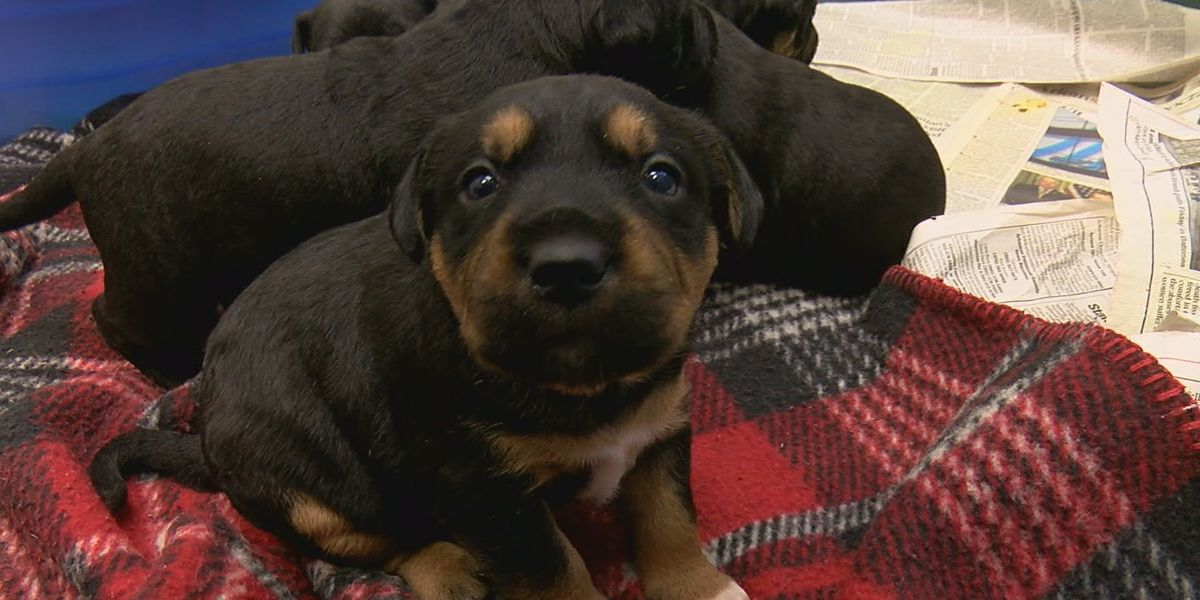 National Puppy Day: Raising awareness about the need for care of and homes for orphaned pups