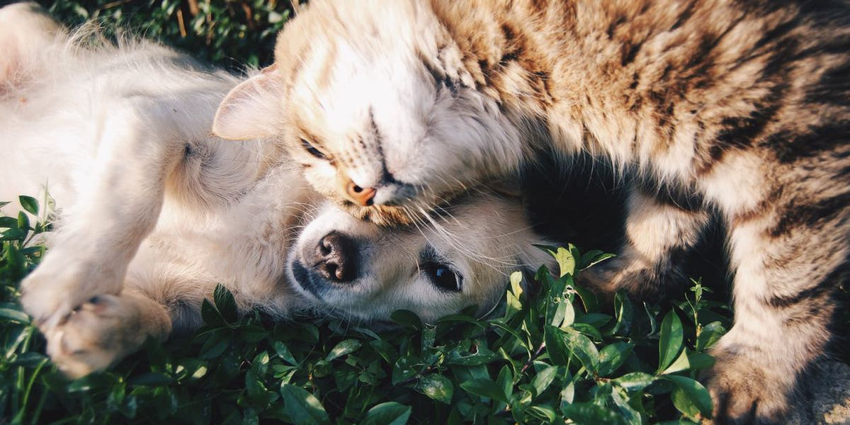 Parent Survival Guide: Finding the right pet for your family