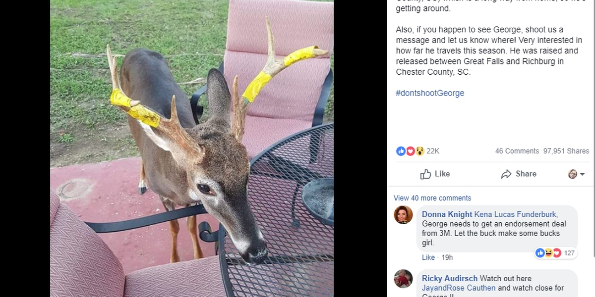 SC woman pleads 'Don't shoot George' as family tracks deer during hunting season