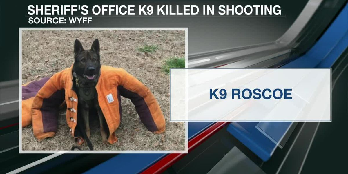 VIDEO: Suspect and K-9 die after 'ambush' shooting in S.C. parking lot, sheriff says