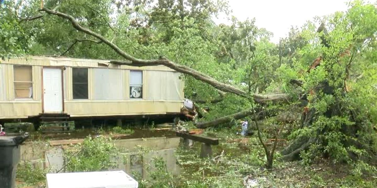 Tree full of bees falls on family's home during Hurricane Barry