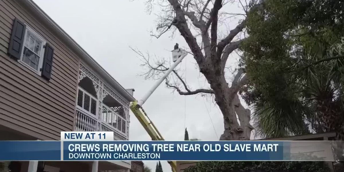 Crews removing tree near old slave mart in downtown Charleston