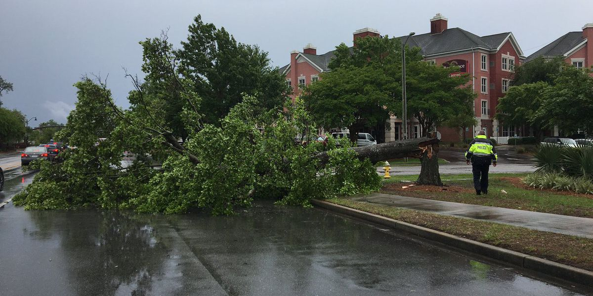 Trees reported down in the Lowcountry including Berkeley, Colleton and Dorchester counties