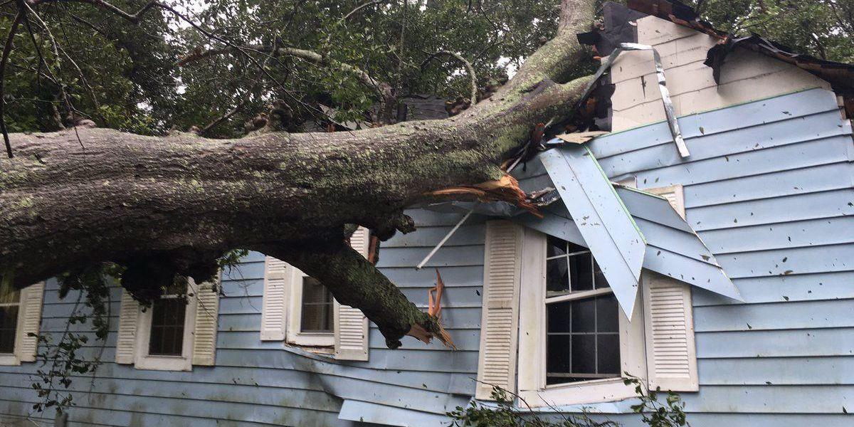 Tree falls on West Ashley home during severe weather