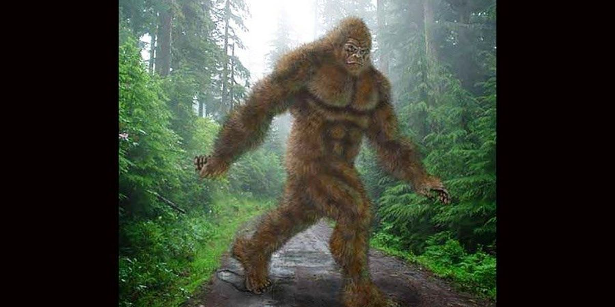 SC police dept. issues tongue-in-cheek warning not to shoot Bigfoot
