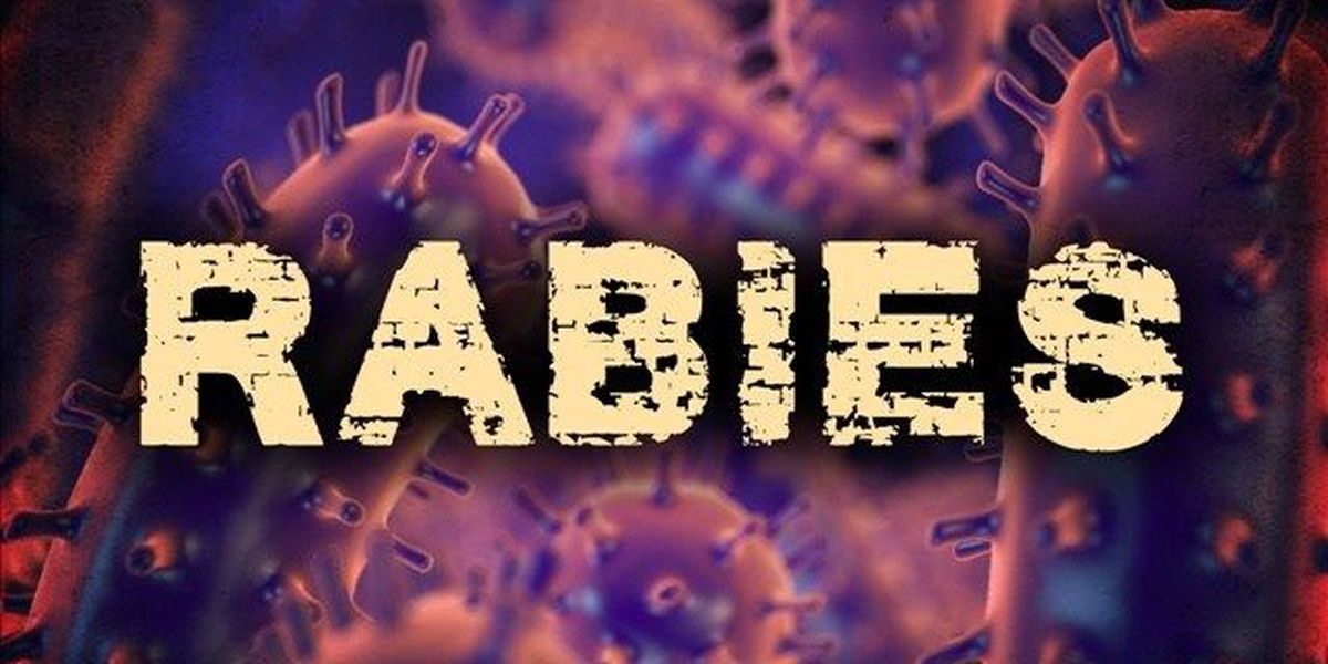 DHEC: Bat exposes 2 people, puppy to rabies in W. Ashley