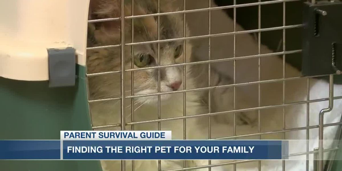 VIDEO: Parent Survival Guide: Finding the right pet for your family