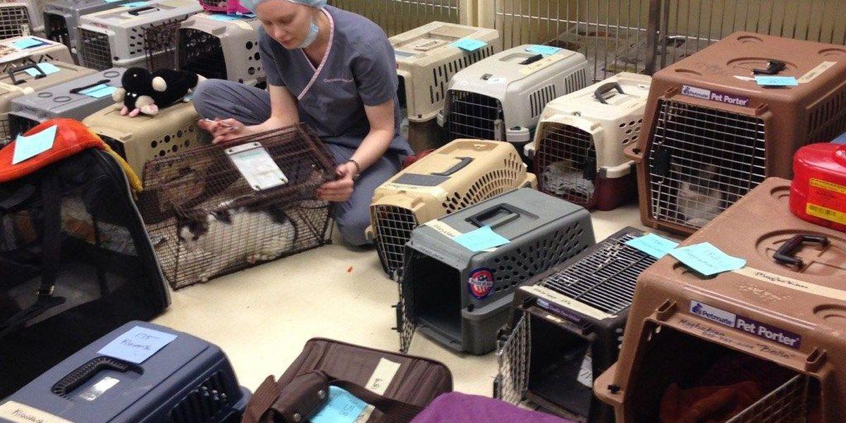 More than 140 cats spayed/neutered at Charleston Animal Society event