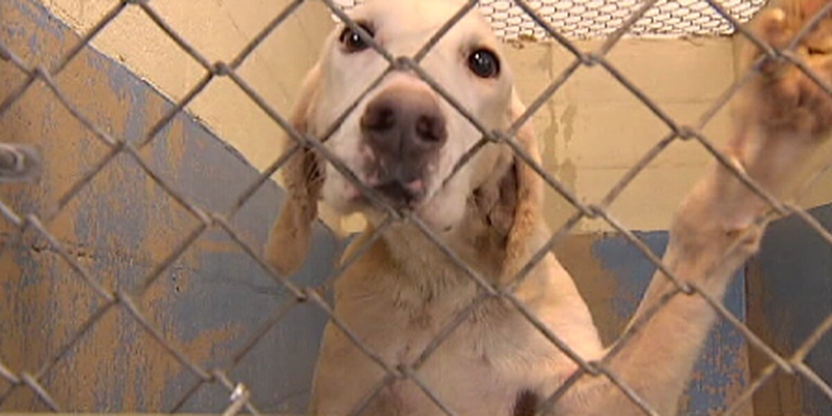 Charleston Co, searches for new storm shelter for people plus pets