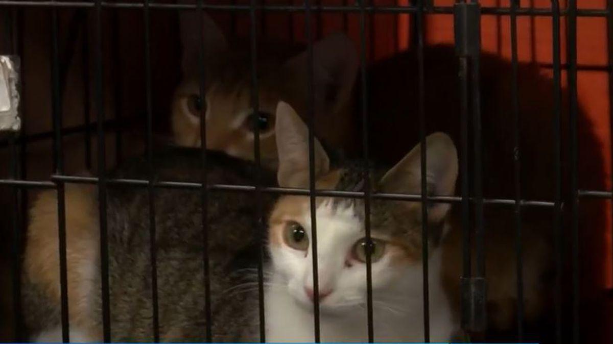 Dorchester Paws Animal Shelter Offers Black Fur Day Deals