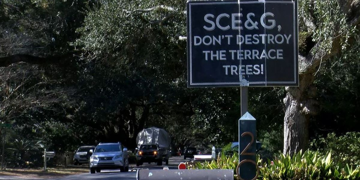 James Island may soon require professional arborist to oversee tree trimming