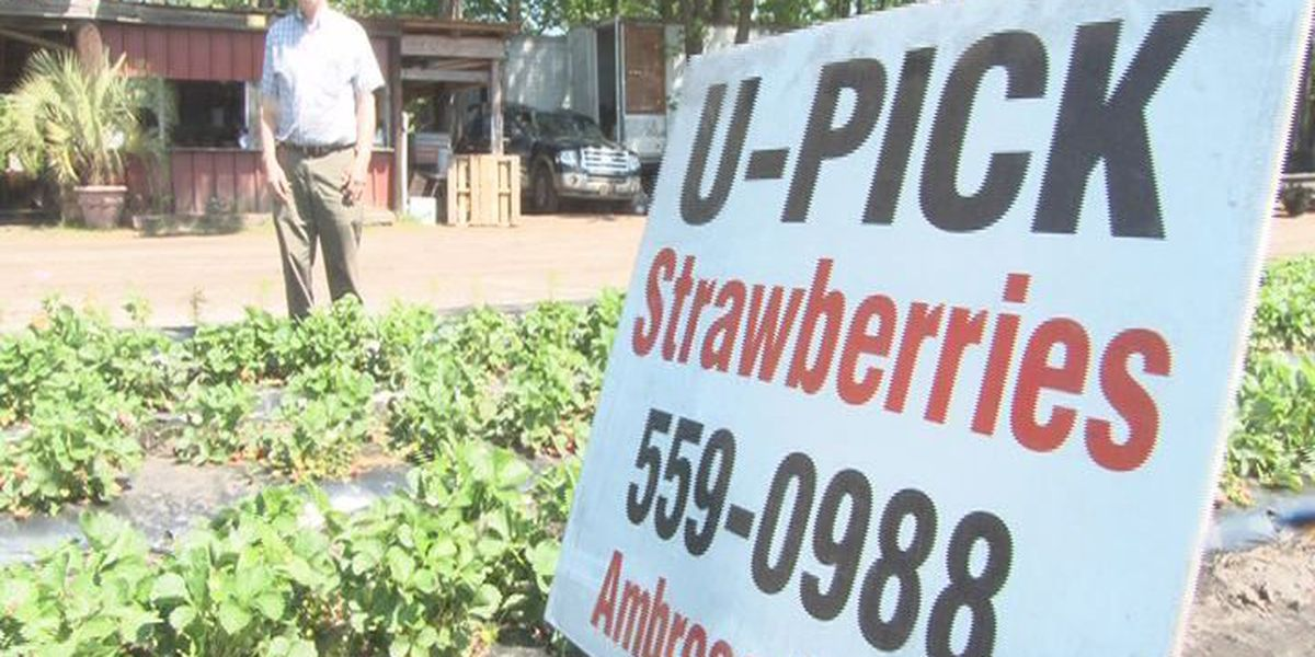 "City of Charleston fines Lowcountry farmer over ""nuisance signs"""