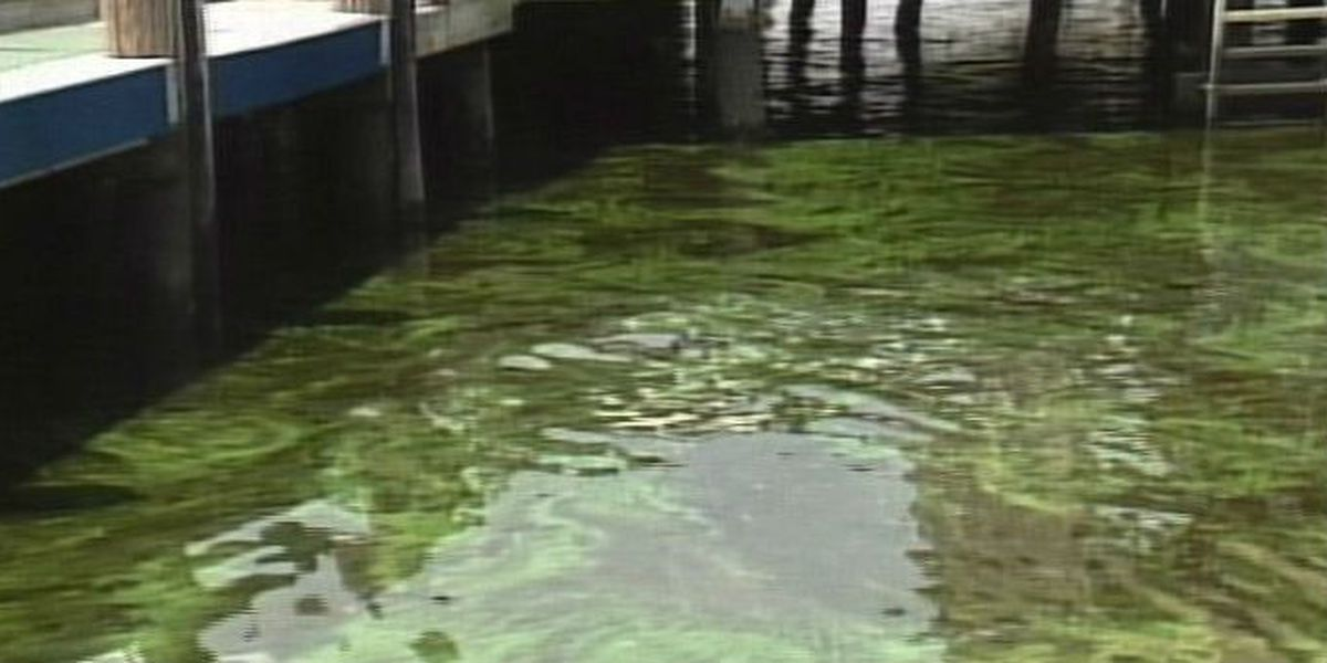 DNR offers workshop on dealing with algae in storm water ponds