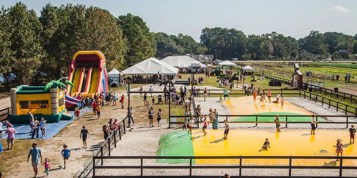 Boone Hall reopens pumpkin patch after Matthew