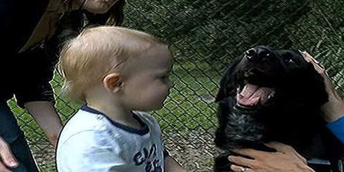 PETA honors Charleston pooch who sniffed out abusive babysitter