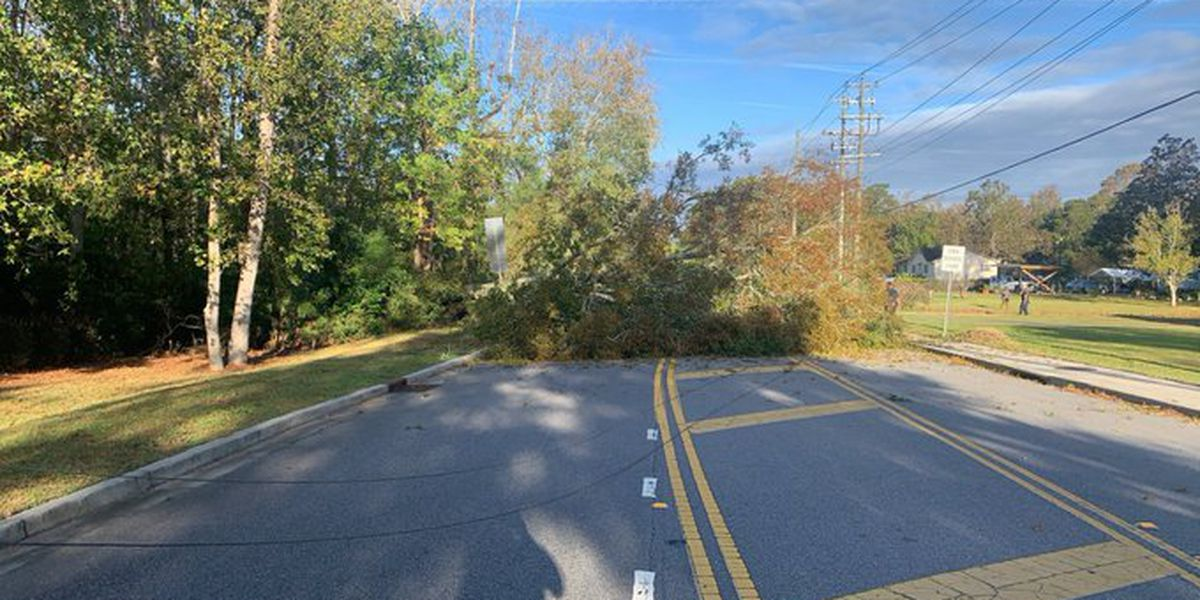 Road closed, tree takes down power lines in Mount Pleasant