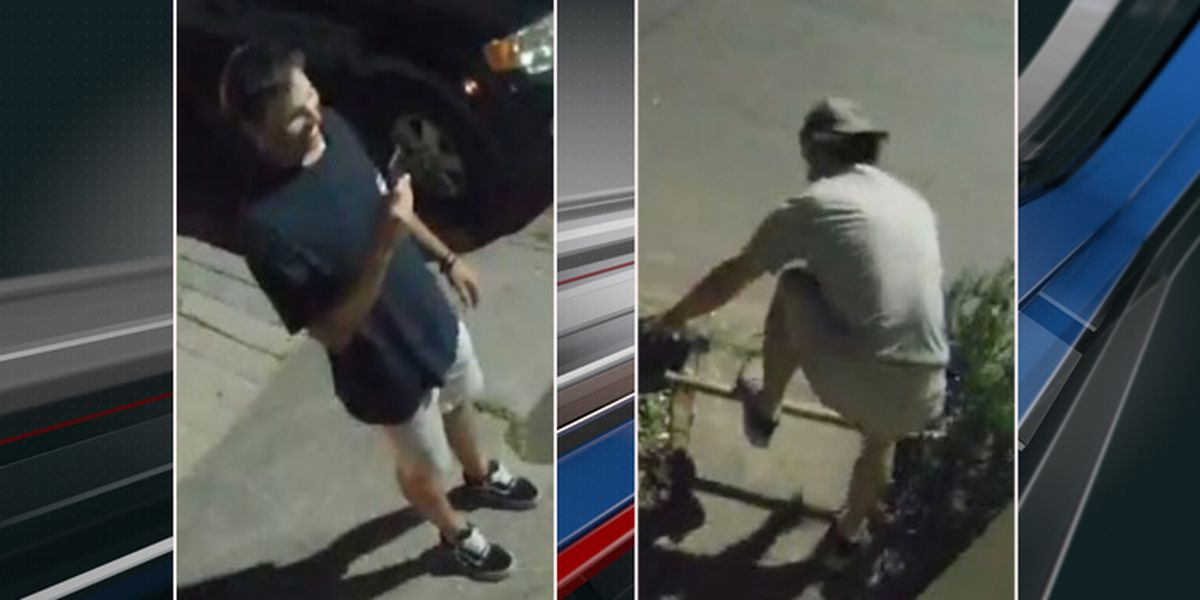 Police seeking to identify two accused of pulling down Charleston tree, filming incident