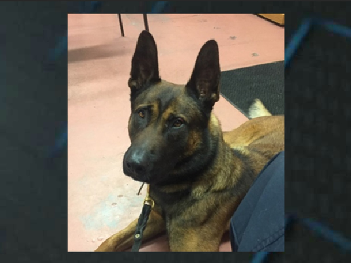 Retired Myrtle Beach K-9 officer dies after suffering medical emergency