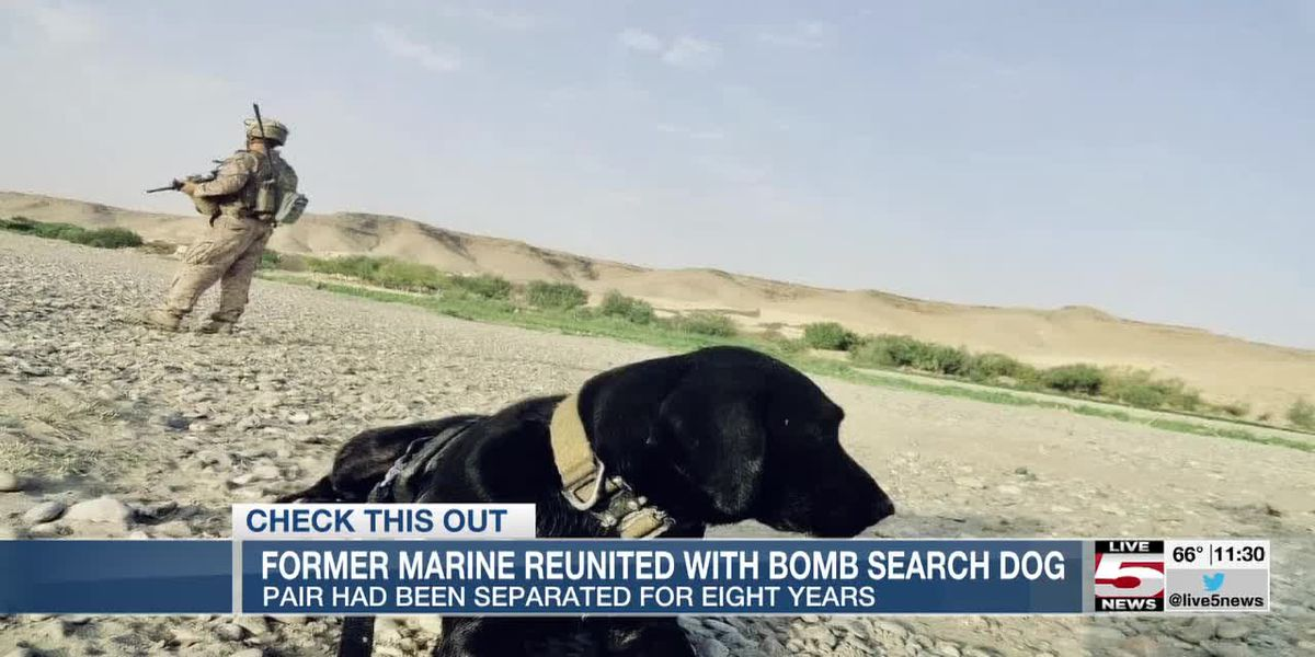 VIDEO: Former marine reunites with bomb dog 8 years after the pair served together overseas