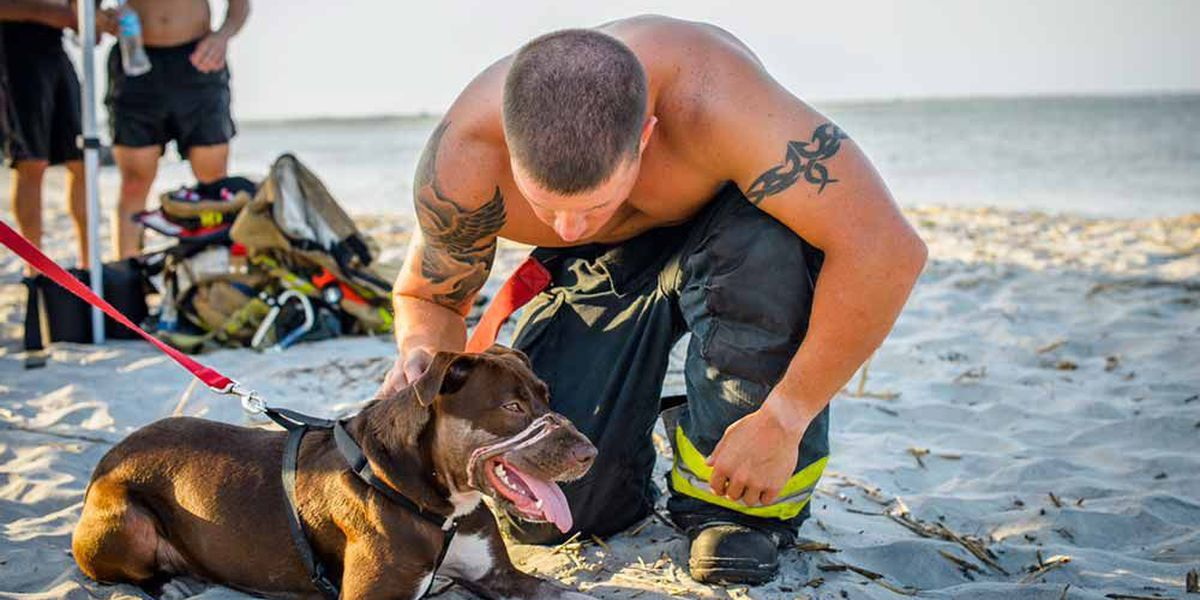 Dog found with muzzle taped shut to appear in firefighter calendar
