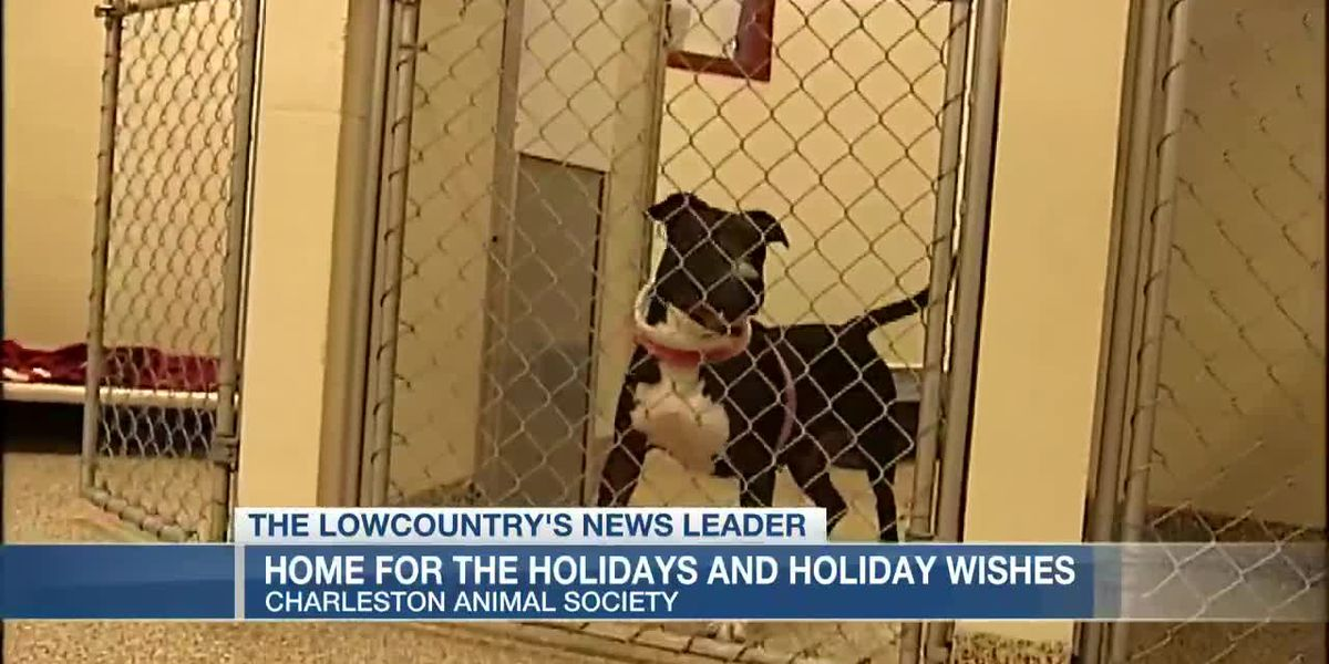 VIDEO: Charleston Animal Society will have elves deliver pets home for the holidays