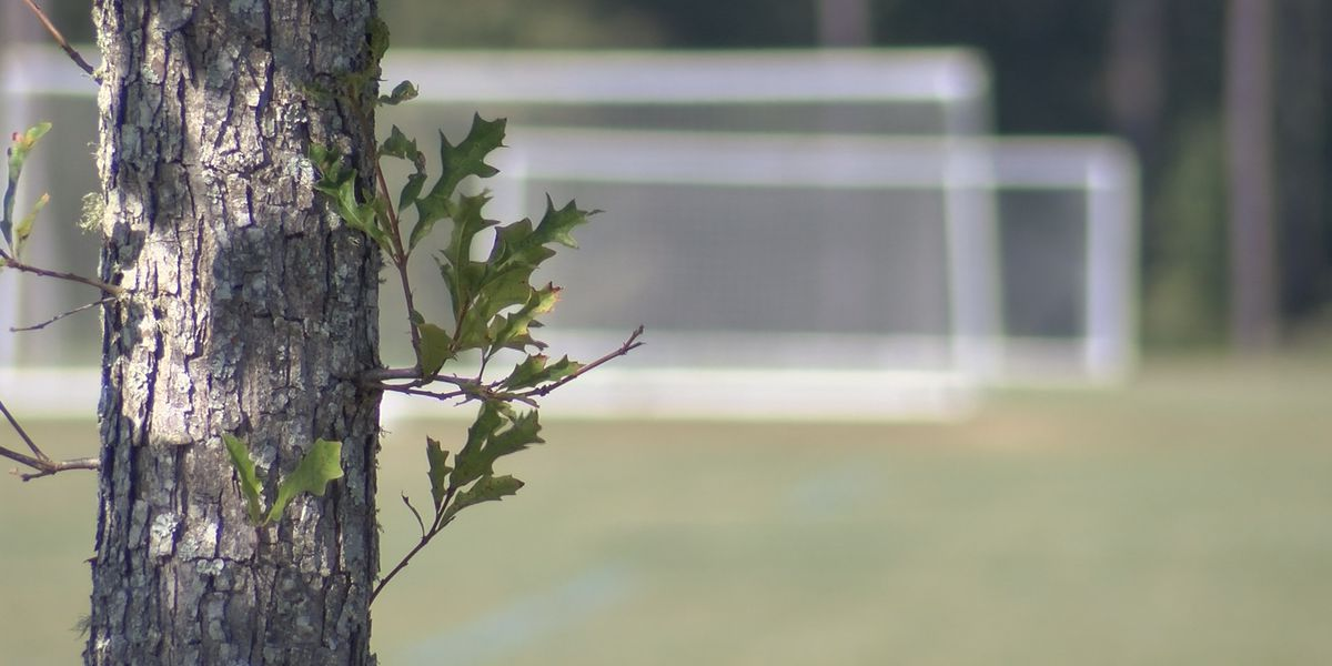Mount Pleasant to test organic maintenance of recreational fields amid pesticide concerns