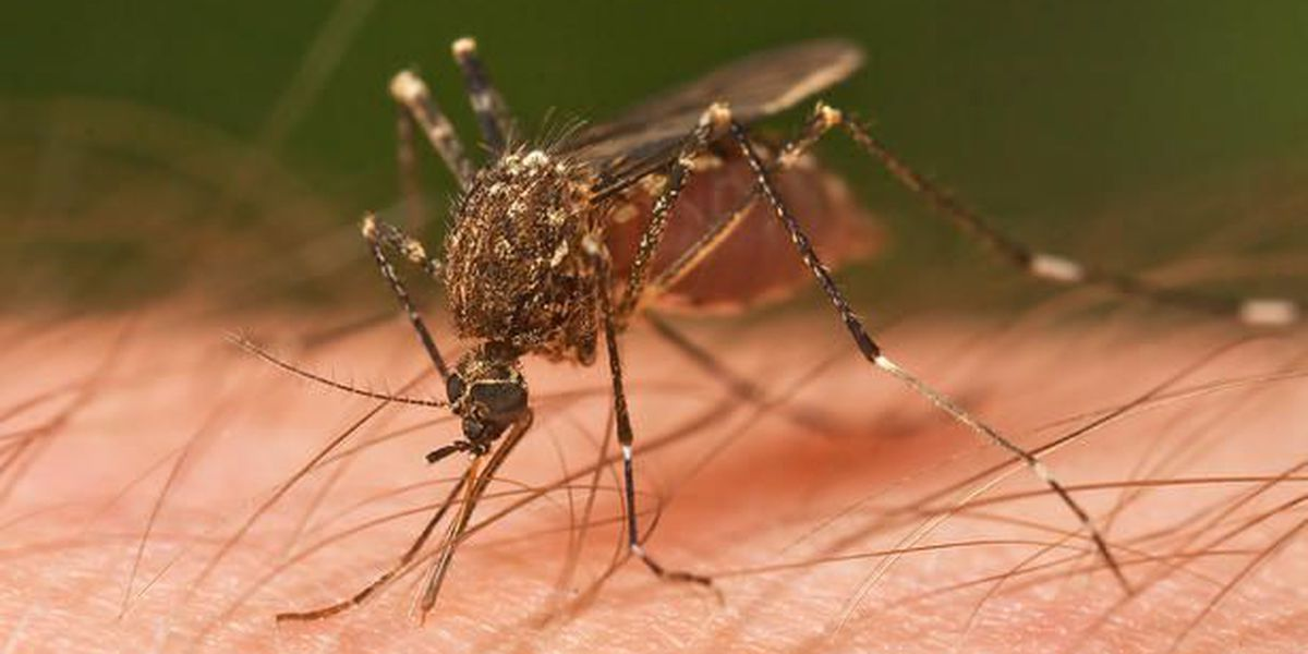 Aerial mosquito spray coming to Charleston Co.