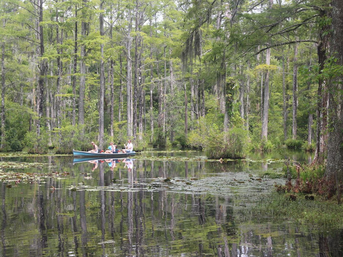 Google partnering with Cypress Gardens for digital access, educational opportunities