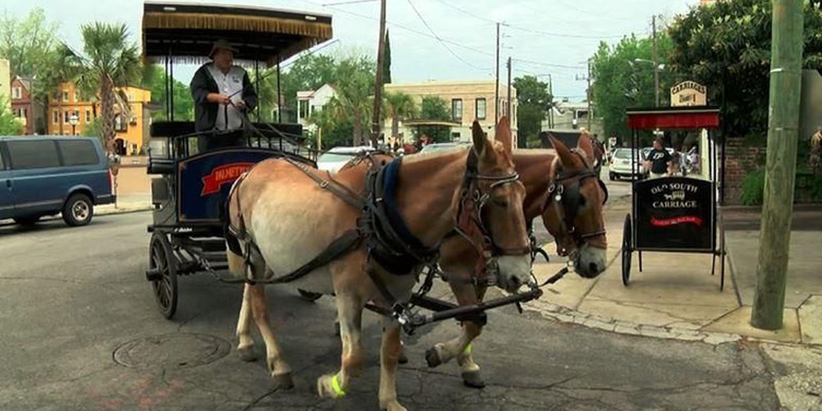 City Council approves amendment to make changes for animal-drawn tour carriages