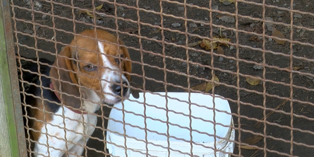 Berkeley County animal shelter can't afford to keep doors open