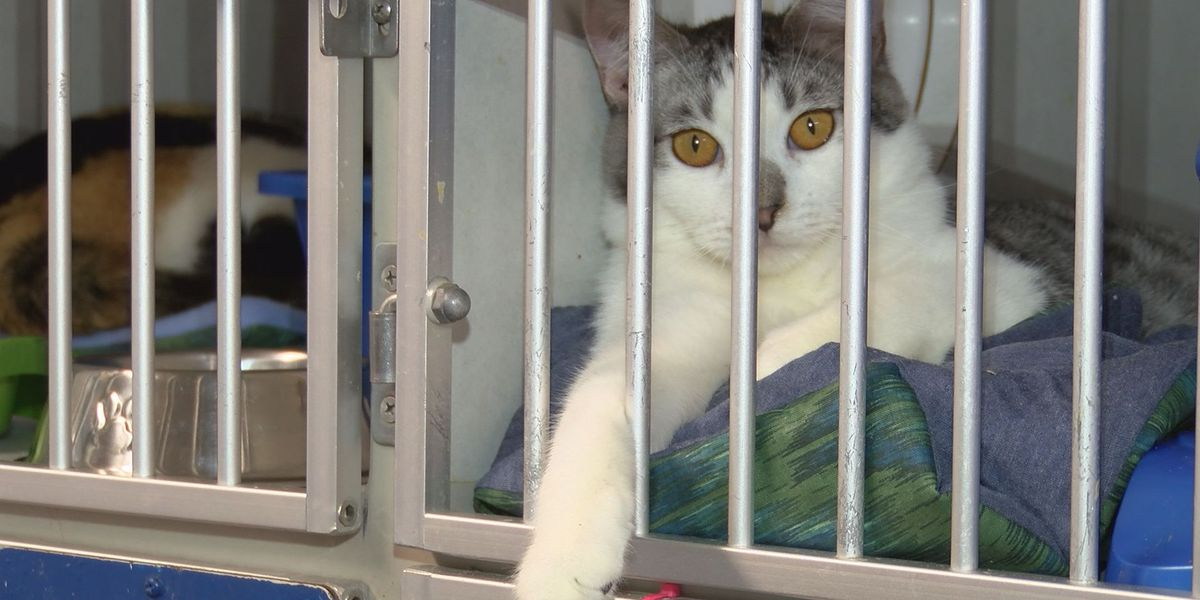 Dorchester Co. strengthens animal cruelty laws, adds roaming cat program
