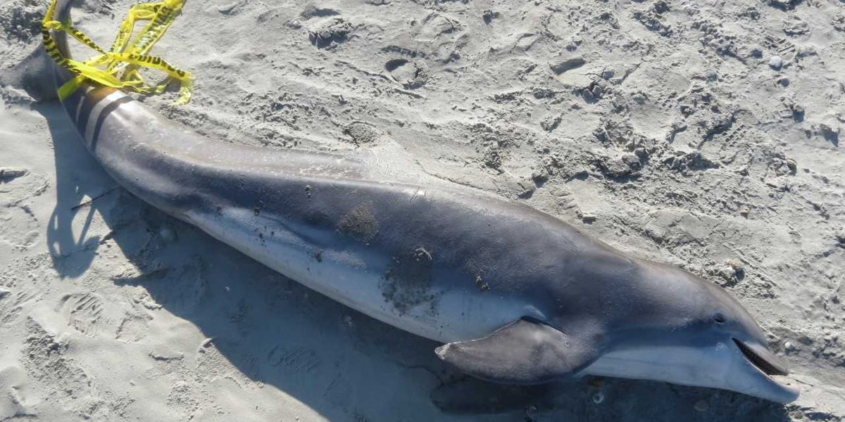 Water contamination study underway as concerns grow following rise in dolphin strandings