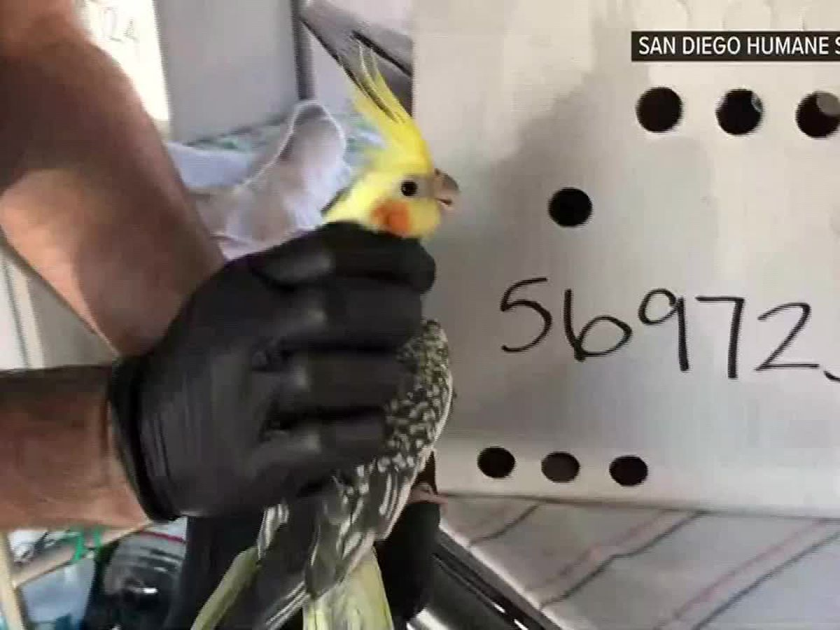 More than 80 birds rescued from one-bedroom apartment in CA