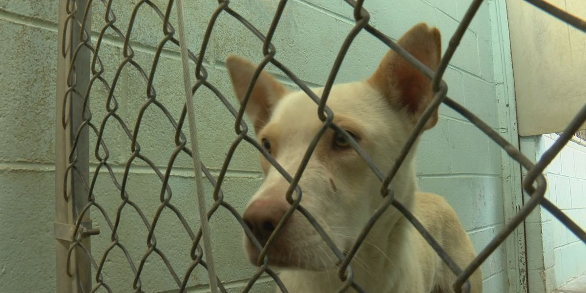 Animal advocates applaud new animal cruelty laws, want to see tethering addressed in 2020