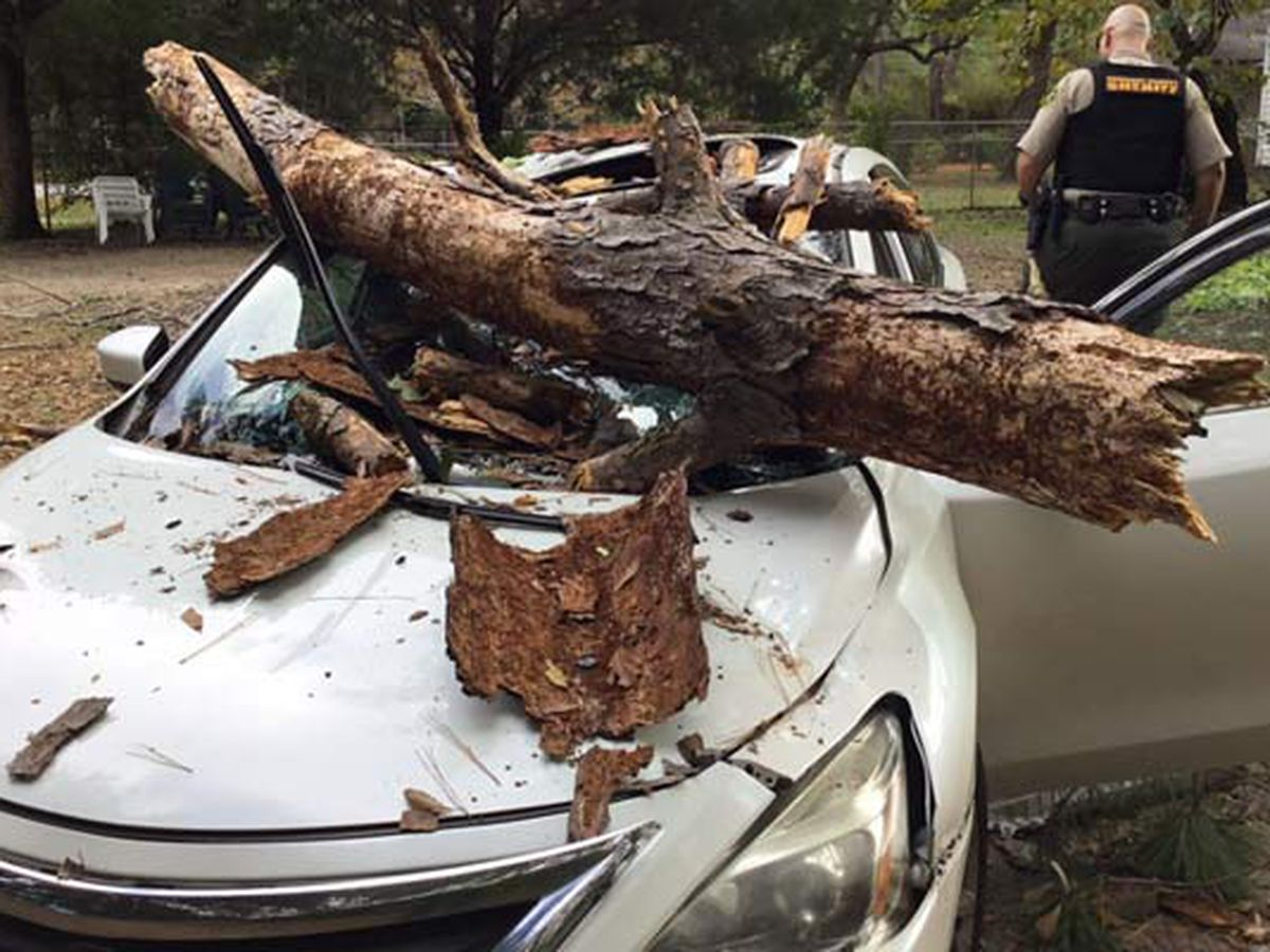 Woman injured when tree smashes into car