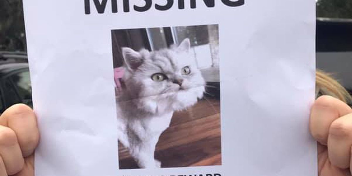 Family says teacher who found beloved missing cat claimed $10,000 reward