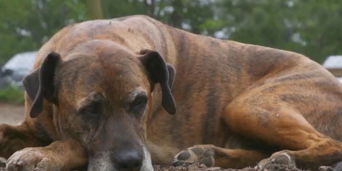 Loved to death: Is euthanizing pets to be buried with dead owners OK?