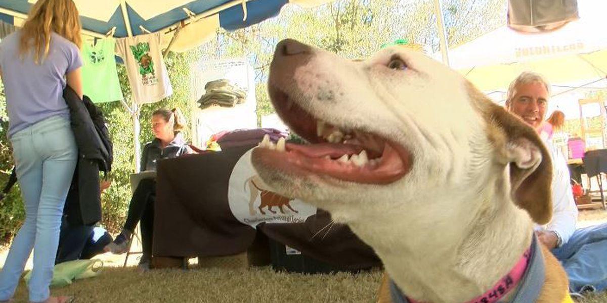 Grab the leash! Pet Fest underway in Mount Pleasant