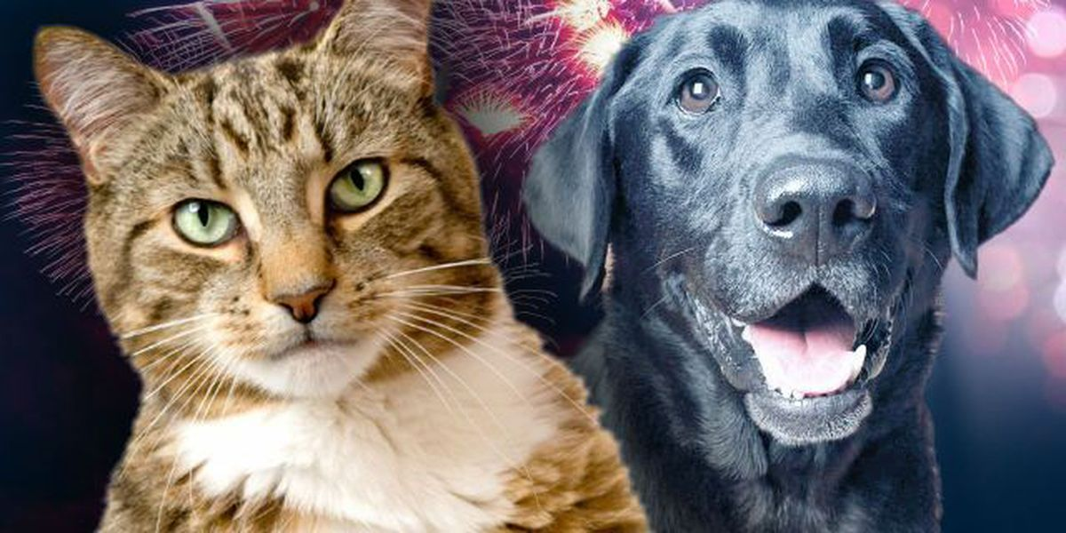 Fireworks frenzy: Area Animal Shelters swamped with missing pets after July 4th