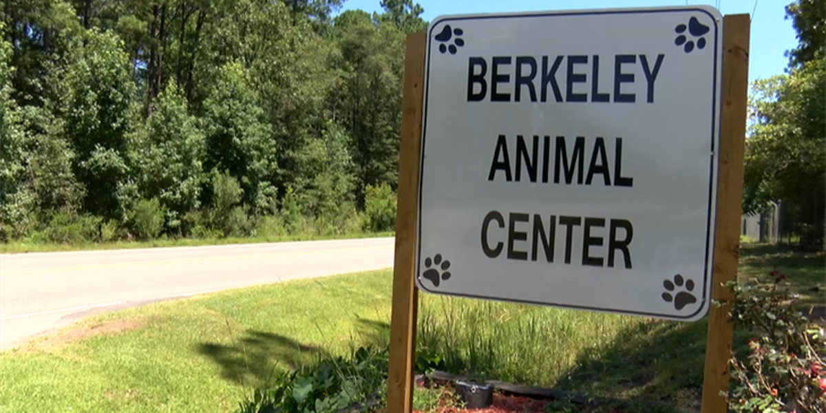 Berkeley Co.: Animals abandoned because families want to go on vacation